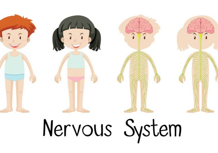role of nervous system